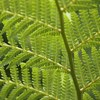 Fern From Below